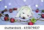 Stock photo cute husky puppy 655879837
