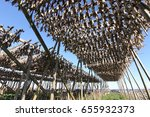 Small photo of Air-dried Cod stockfish hanging on wooden racks and blue sky background at Moskenes, Lofoten Islands, Norway
