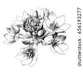 agave flower buds sketch vector ... | Shutterstock .eps vector #656193277