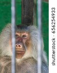 baboon looking through the bars ... | Shutterstock . vector #656254933