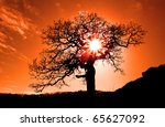 Old Oak In Sunset With Sun