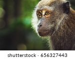 close up of a monkey in a rain... | Shutterstock . vector #656327443