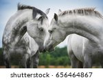 Stock photo two beautiful white horses 656464867