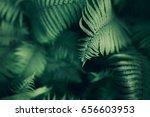 perfect natural fern pattern.... | Shutterstock . vector #656603953