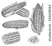 corn hand drawn vector... | Shutterstock .eps vector #656628463