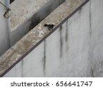 bird | Shutterstock . vector #656641747