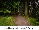 path leading through coniferous ... | Shutterstock . vector #656677177