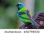 green headed tanager   Shutterstock . vector #656798533