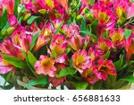 Alstroemeria Commonly Called...