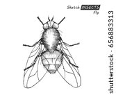 hand drawn ink sketch of fly... | Shutterstock .eps vector #656883313