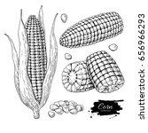 corn hand drawn illustration... | Shutterstock . vector #656966293