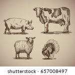 Farm Animals In Sketch Style...