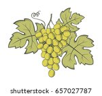 image of grapes with bunches... | Shutterstock .eps vector #657027787