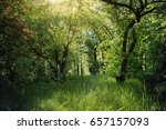deciduous forest. forest trail... | Shutterstock . vector #657157093