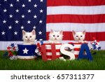 Stock photo three fluffy white small kittens sitting in patriotic designed pots on green grass american flag 657311377