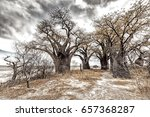 landscape with a group of... | Shutterstock . vector #657368287