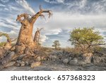 landscape with baobab trees and ... | Shutterstock . vector #657368323