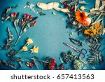 various autumn flowers and... | Shutterstock . vector #657413563