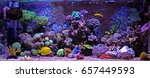 coral reef aquarium tank | Shutterstock . vector #657449593
