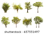 isolated tree on white... | Shutterstock . vector #657551497