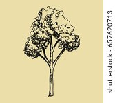 tree sketch. hand drawing vector | Shutterstock .eps vector #657620713