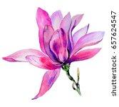 wildflower magnolia flower in a ...   Shutterstock . vector #657624547