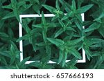 green leaves background blurred ... | Shutterstock . vector #657666193