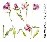 Stock photo set watercolor illustrations of lily flowers botanical illustration 657721237