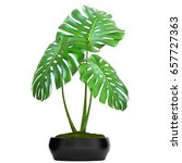 3d digital render of monstera... | Shutterstock . vector #657727363