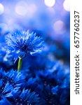 Cornflowers. Wild Blue Flowers...