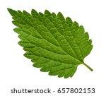 nettle leaf isolated on white... | Shutterstock . vector #657802153