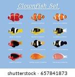 clownfish anemonefish set...   Shutterstock .eps vector #657841873