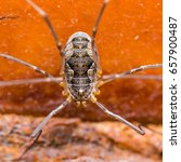 Small photo of Spider Arachnid Insect Close Up