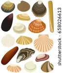 Collection Of Bivalve Seashell...