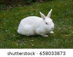 white rabbit. albino laboratory ... | Shutterstock . vector #658033873