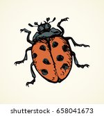 Big Cute Coccinellidae On Whit...