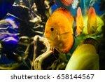 wonderful and beautiful... | Shutterstock . vector #658144567