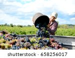 handsome young man winemaker in ... | Shutterstock . vector #658256017