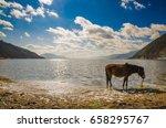 horse in napa lake shangri la... | Shutterstock . vector #658295767