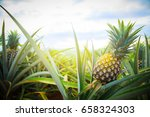 pineapple tropical fruit... | Shutterstock . vector #658324303