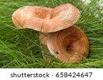 Lactarius Torminosus  Commonly...