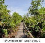 wild nature of panama. tropical ... | Shutterstock . vector #658434577