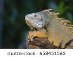 close up photo portrait of a... | Shutterstock . vector #658451563