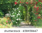 Arch Twined With Roses In The...