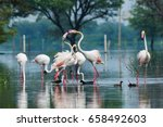 a scenery by flamingos ... | Shutterstock . vector #658492603