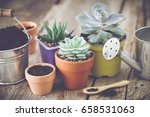 Succulents In Pots  Bucket Wit...
