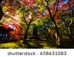 fall foliage colors against... | Shutterstock . vector #658631083
