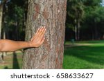 male hand place on trunk of... | Shutterstock . vector #658633627