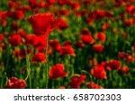 poppy flowers field. beautiful... | Shutterstock . vector #658702303