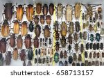 collection of beetle with pins. ... | Shutterstock . vector #658713157